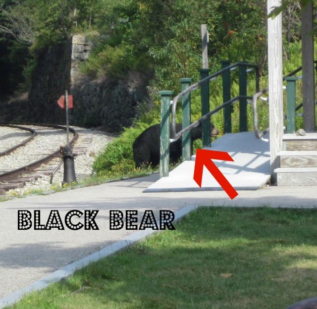 4-bear