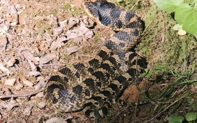 Snakes on the Appalachian Trail