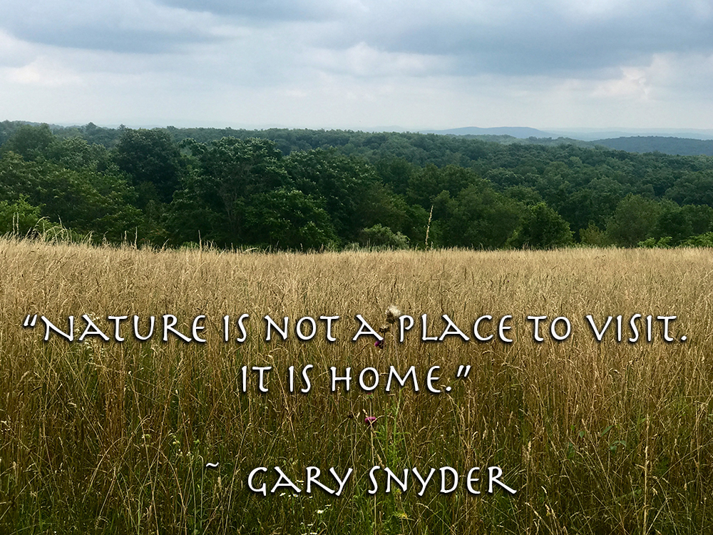"Quote: ""Nature is not a place to visit. It is home."" Gary Snyder"