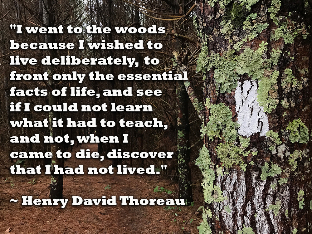 "Quote: ""I went to the woods because I wished to live deliberately, to front only the essential facts of life, and see if I could not learn what it had to teach, and not, when I came to die, discover that I had not lived."" - Henry David Thoreau"